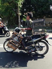 This birdcage carrier impressed me.