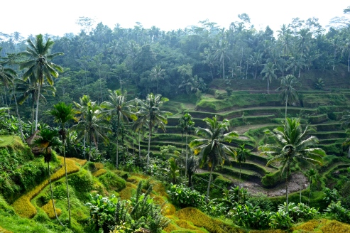 Rice field terraces outside of the city.