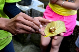 Our tour guide explains the process with which the Luwak eats the beans and then excretes them.