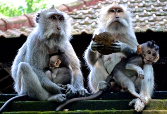 A family sitting on the mossy temple wall in the Monkey Forest.