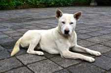 A dog waiting near Mount Batur.
