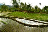 Malino, a two hour drive away from Makassar. Stunning rice fields and waterfalls make this trip extremely worth it.