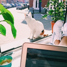 Working from home with Tiga