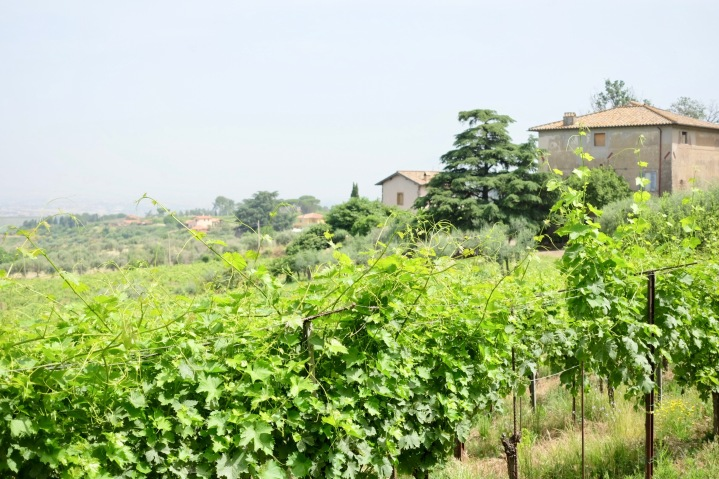 The Old Frascati Wine Tour